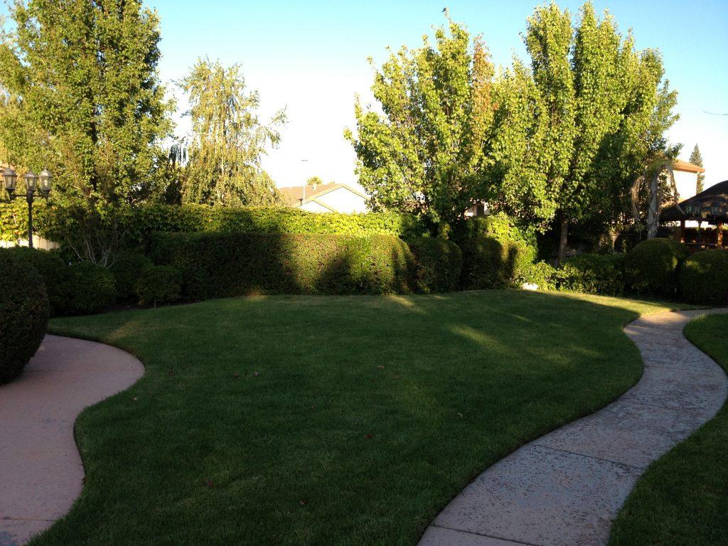 Sacramento Lawn & Sod Installation I CuttingEdge Tree & Landscape Inc.- 916 420-5607