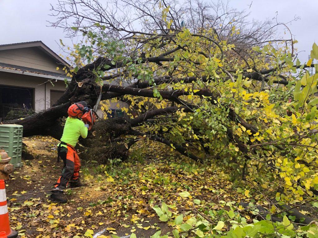 Sacramento Tree Services - CuttingEdge Tree & Landscape Inc.